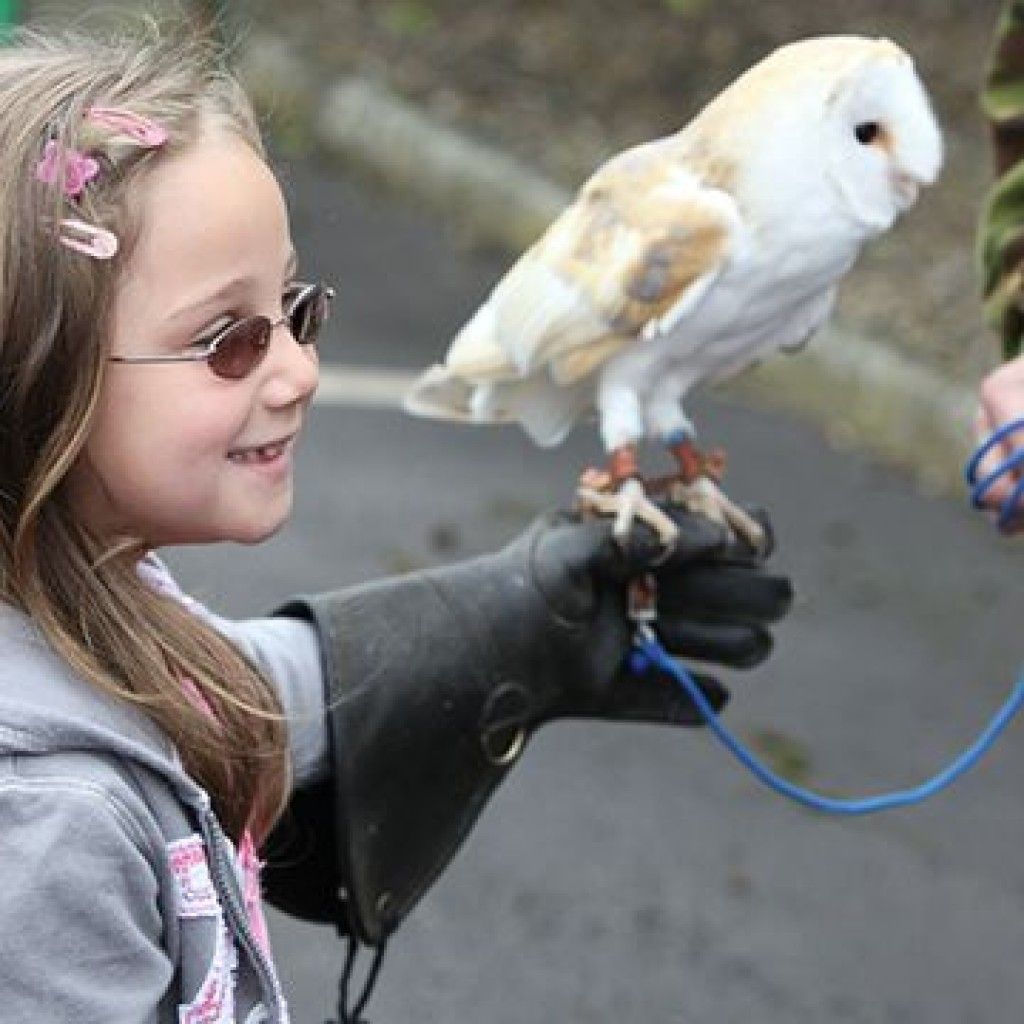 Indoor family fun days - falconry